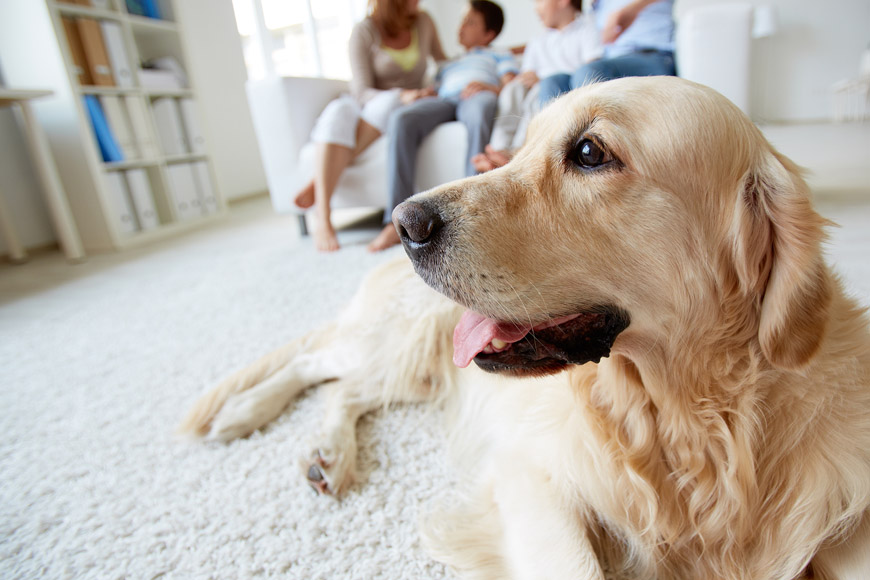 8 Tips for Bringing a Pet into the Family