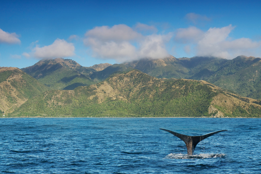 9 Cool Things to do with Kids in New Zealand