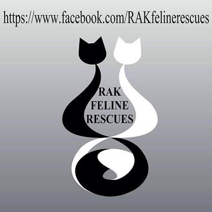 rak feline rescues