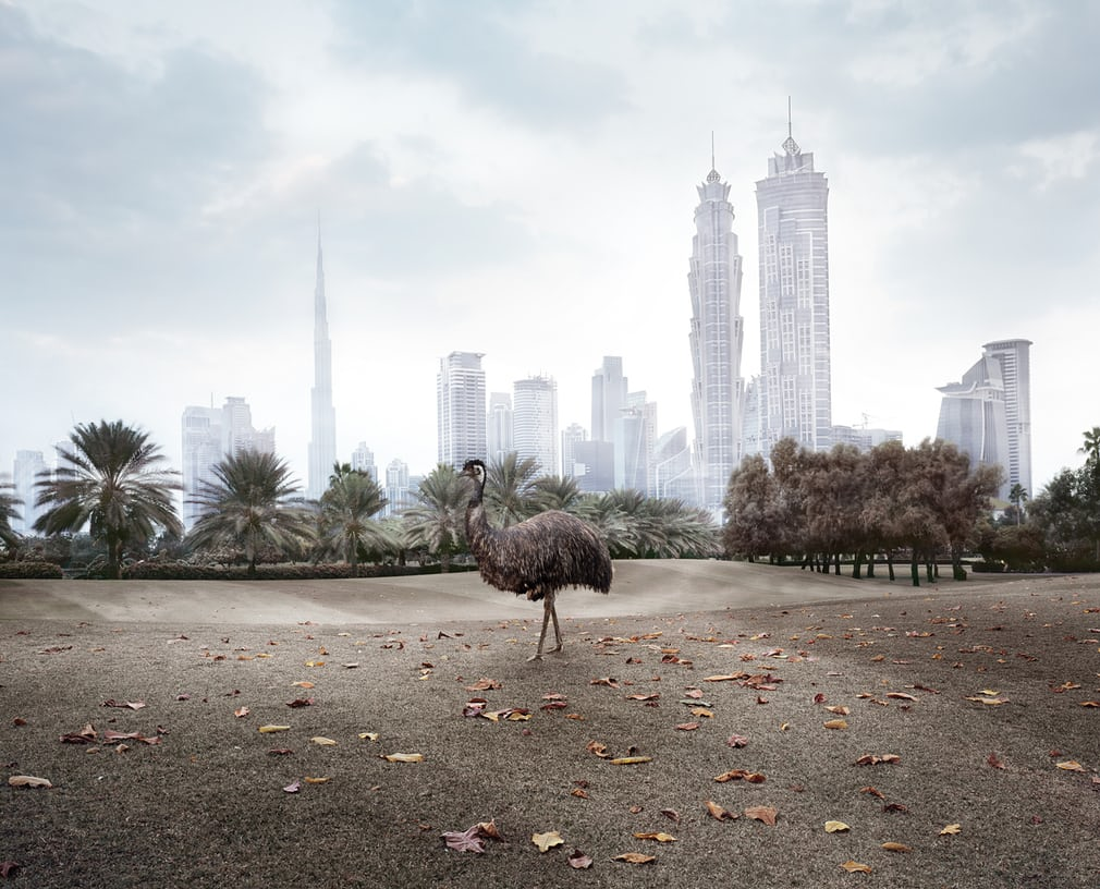 Zoo animals in Dubai - photography series by Richard Allenby-Pratt