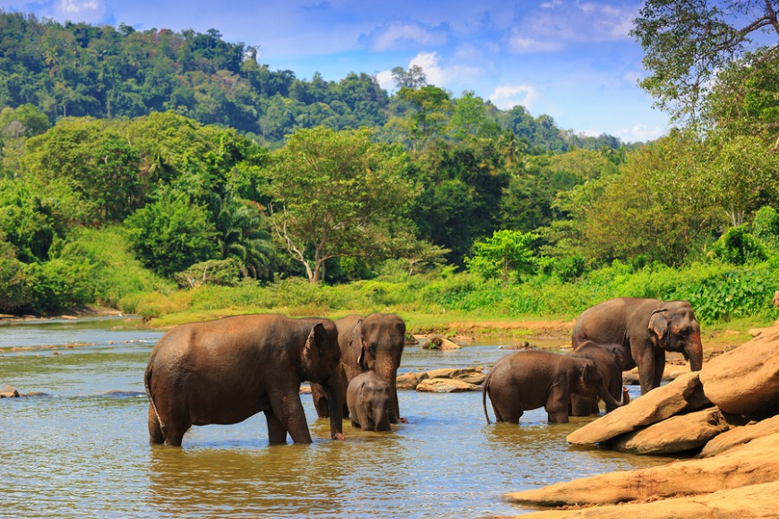 Sri Lanka... Home to gorgeous elephant orphanages, beaches and the spiciest food!