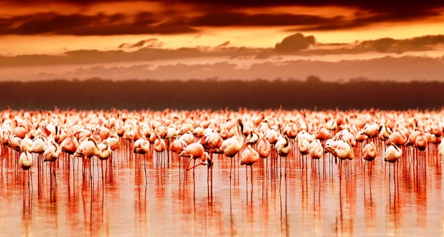 Kenya... This place is incredibly fascinating, and is hope to the Big 5!