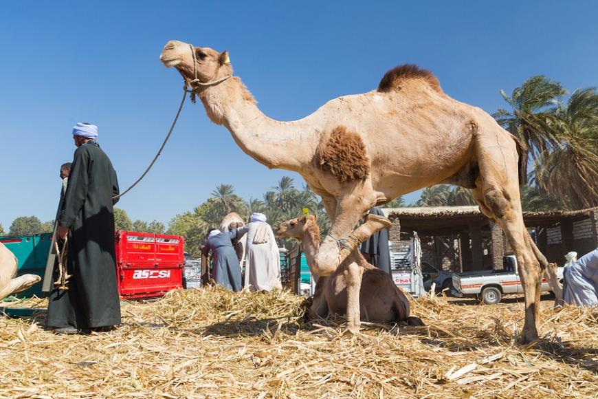 1. Lisaili Camel Market