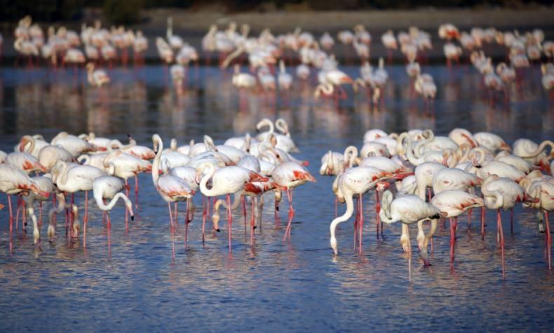 9. Ras Al Khor Wildlife Centre (RAWKS)