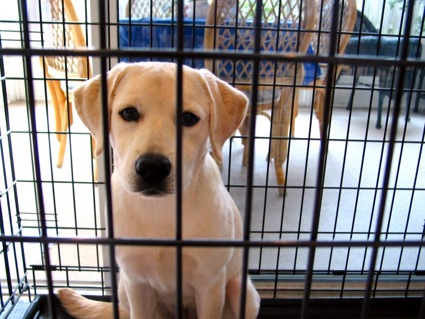Adopt animals from local shelters or choose reputable breeders.