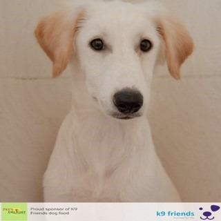 Adopt a Dog in Dubai - Zorro at K9 Friends