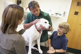 Vets and Pet Care in Vietnam