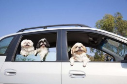 8 Precautions to Take to Avoid Canine Car Sickness