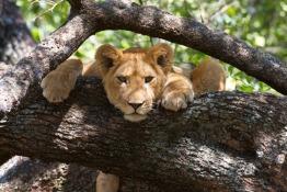 Dubai Safari To Open Before Dubai's National Day