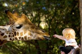 Saudi Arabia Zoo