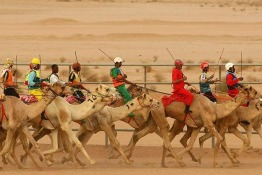 """Camels Strut Their Stuff in Saudi's Camel """"Beauty Pageant"""""""