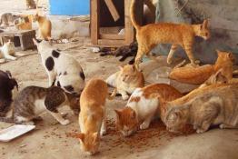 Animal Project Dubai