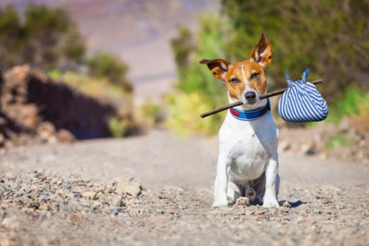 Walking Dogs Off-Leash and Owning Wild Animals Now Illegal in UAE