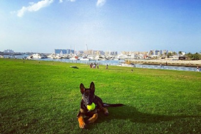 The Best Dog-Walking Spots in Dubai