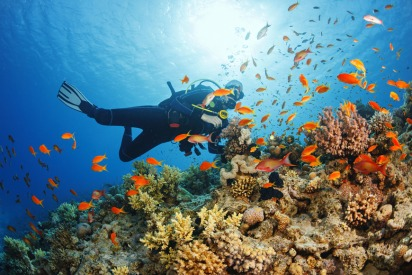 Scuba Diving in Oman