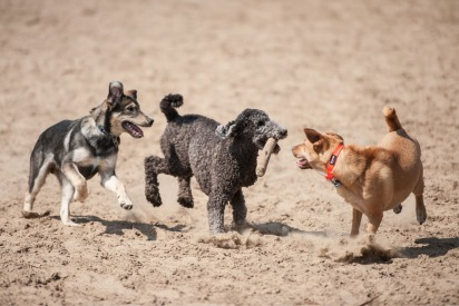 New Park in Dubai Lets Dogs Run Free