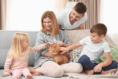Preparing Cats for a Baby