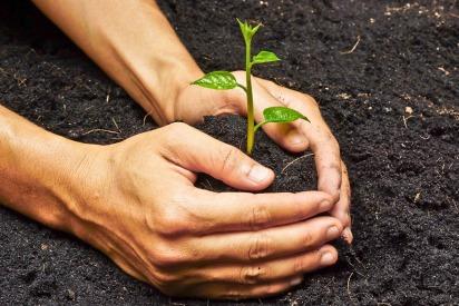Planting a tree in Abu Dhabi