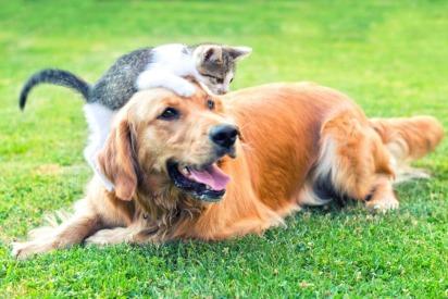 Pets in Abu Dhabi
